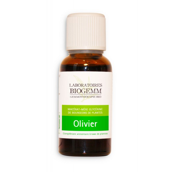 gemmotherapie olivier macerat